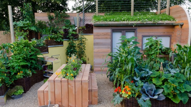 Grow your own five-a-day in a tiny space